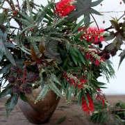GardenistaHolidayArrangement_BottleBrush-Sophia-Moreno-Bunge