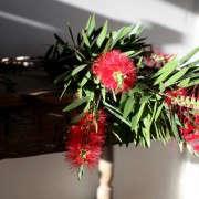 GardenistaHolidayArrangement_BottleBrushBranches-Sophia-Moreno-Bunge