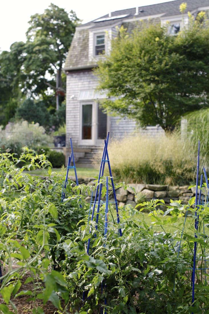 Georgia-Marsh-Rhode-Island-garden-Christine-Chitnis-4-gardenista