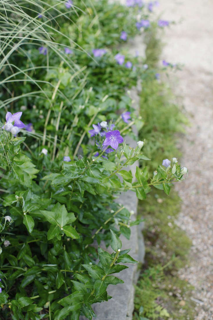 Georgia-Marsh-Rhode-Island-garden-Christine-Chitnis-7-gardenista