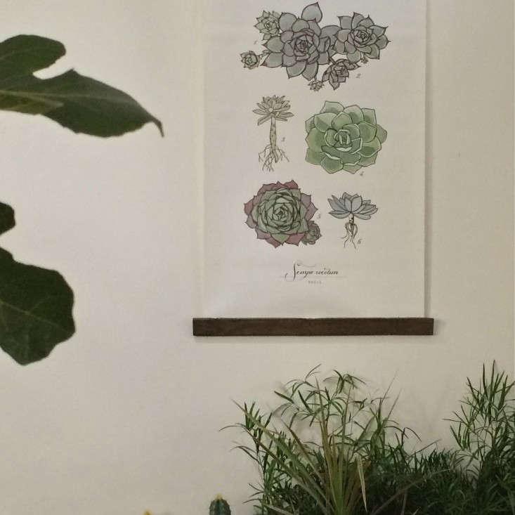 Grace-&-Thorn-Hackney-Road-Christine-Chang-Hanway_gardenista-5