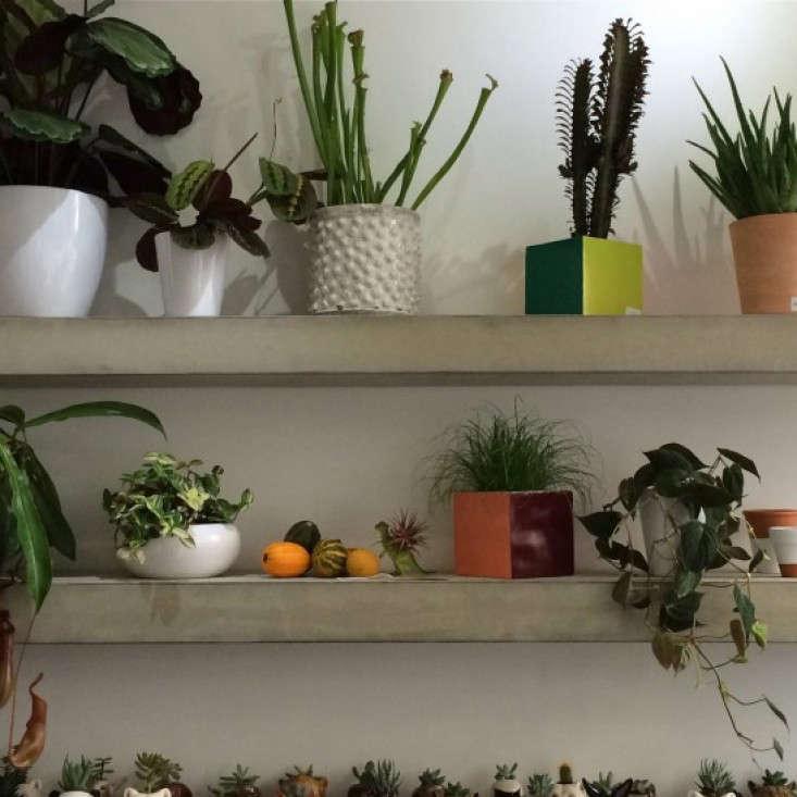 Grace-&-Thorn-Hackney-Road-Christine-Chang-Hanway_gardenista-7