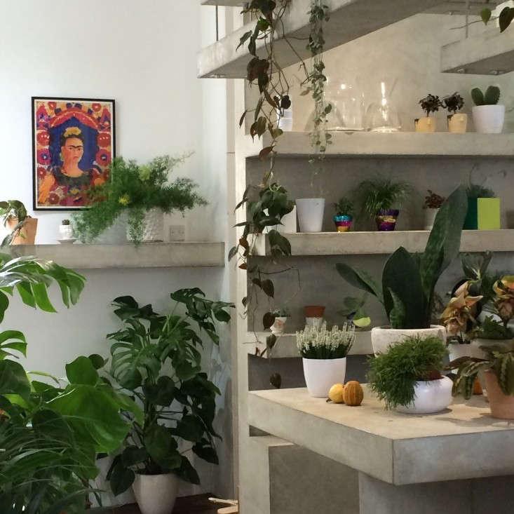 Grace-&-Thorn-Hackney-Road-Christine-Chang-Hanway_gardenista-8