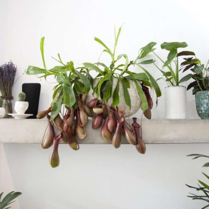 Grace-&-Thorn-Hackney-Road-Emli-Bendixen_gardenista-3