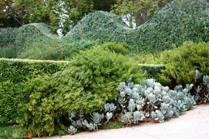 Mejores arbustos para la belleza duradera