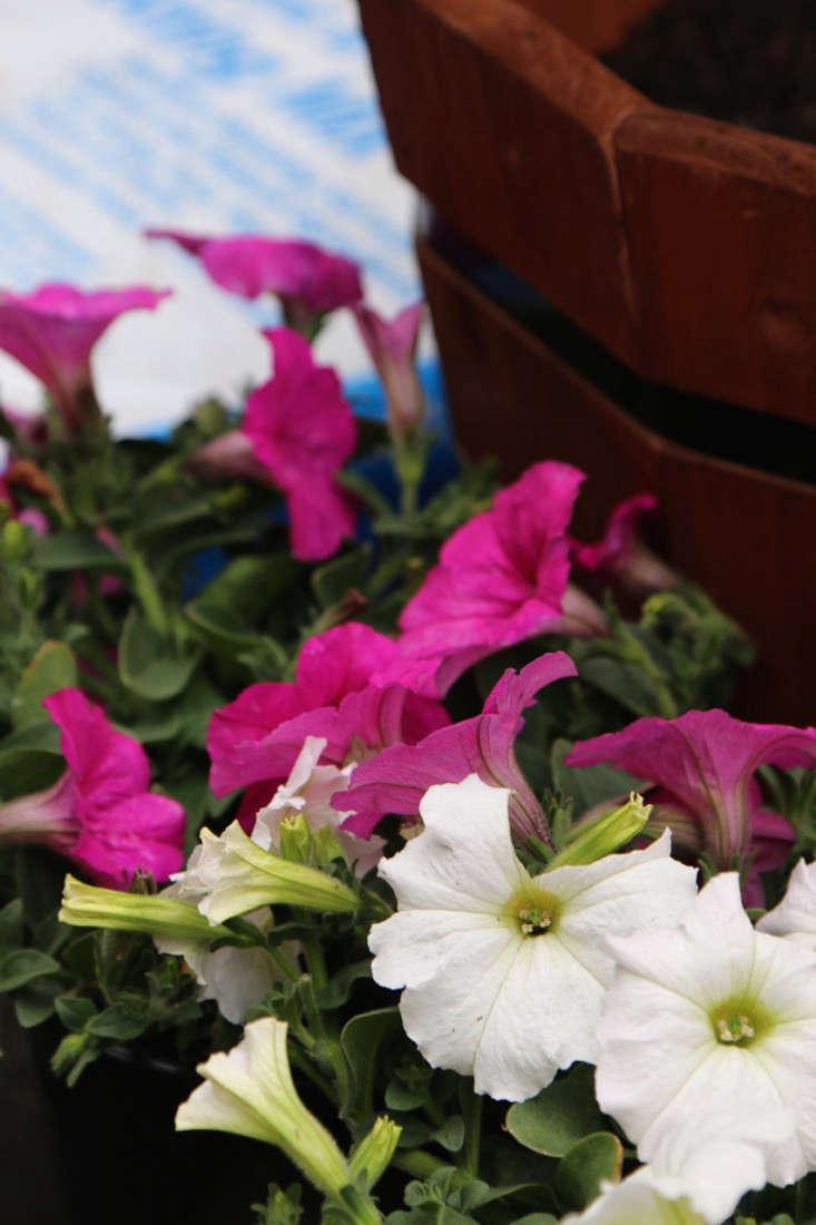 Home-Depot-Gardenista-Memorial-Update-2
