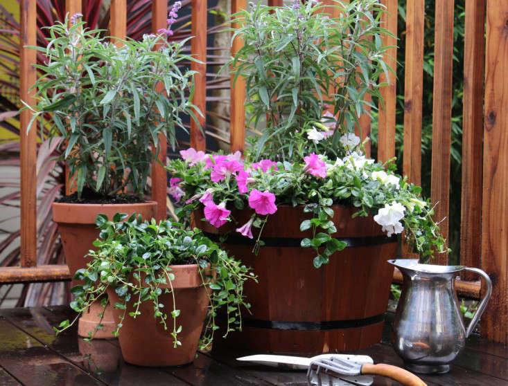Home-Depot-Gardenista-Memorial-Update-6