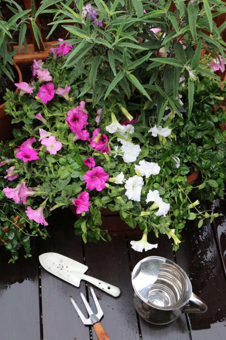Home-Depot-Gardenista-Memorial-Update-7