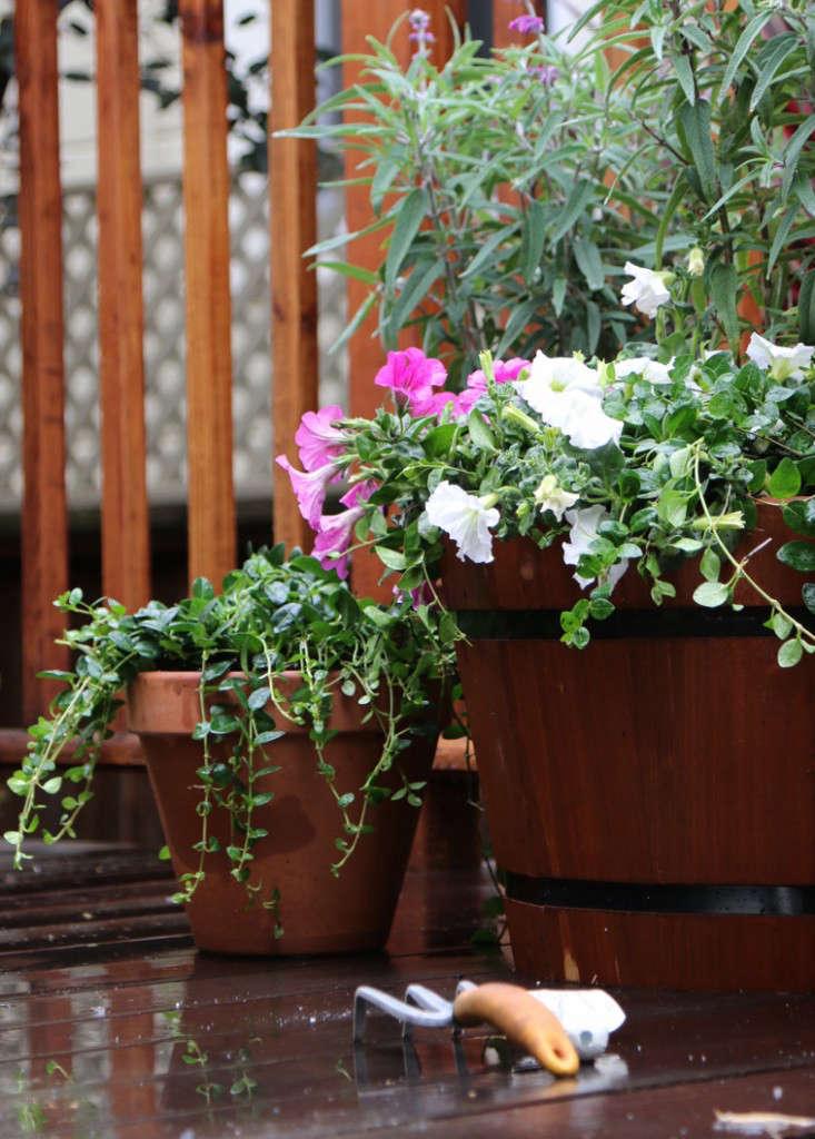 Home-Depot-Gardenista-Memorial-Update-8