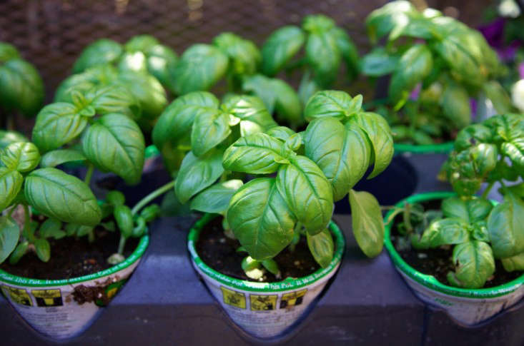 Home-Depot-Planting-Vegetable-Garden-Gardenista-1