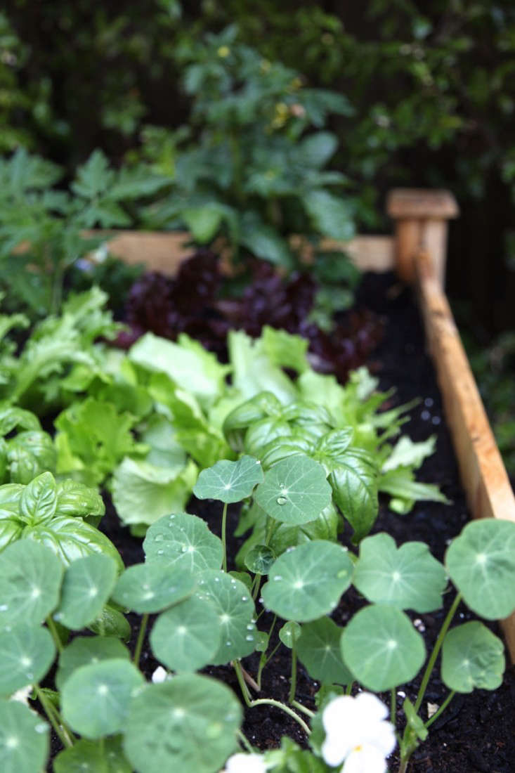 Home-Depot-Planting-Vegetable-Garden-Gardenista-12a