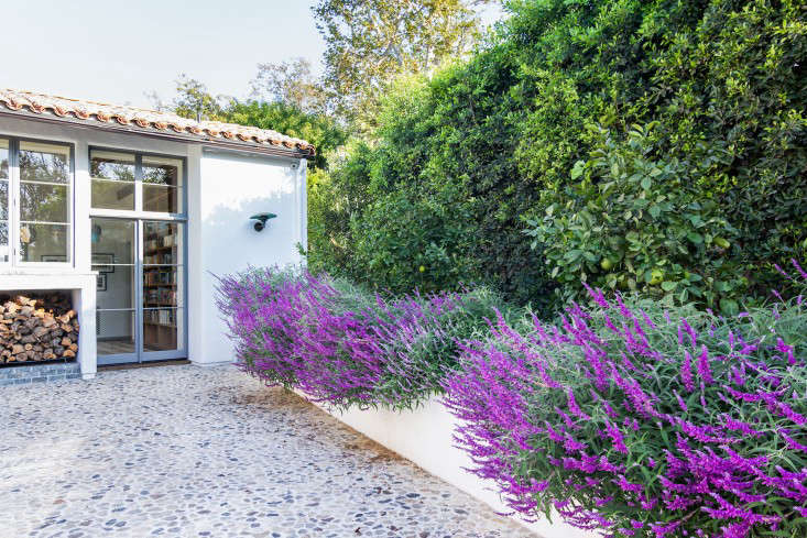Howard-Hughes-LA-garden-salvia-citrus-trees-gardenista