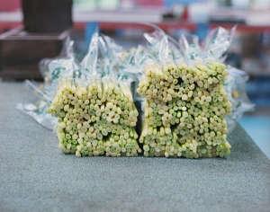 Howard Sooley photo, Scilly Flowers. Gardenista