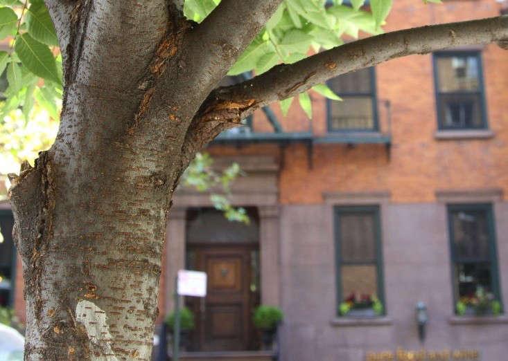 Leaf Peeping In New York Take A Tree Identification Class
