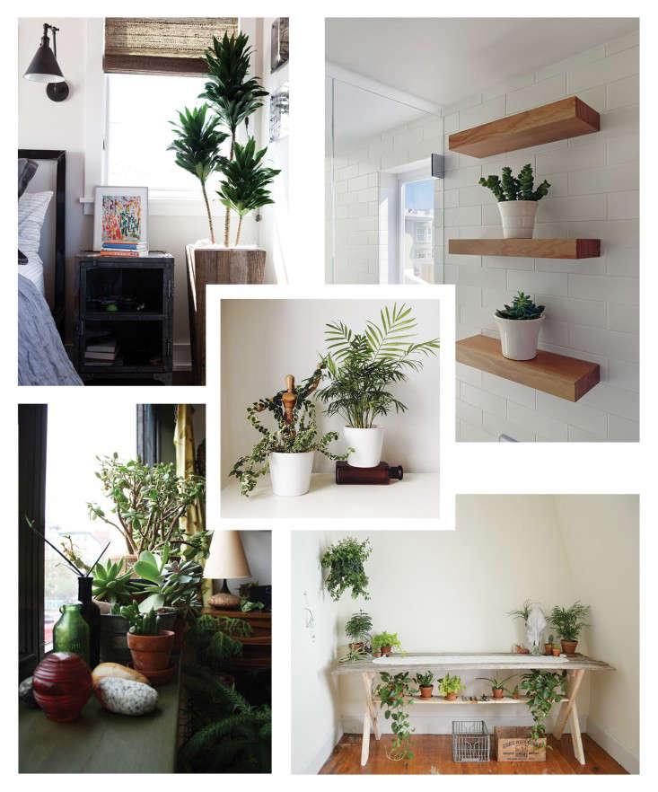 IndoorGardensCollage
