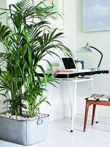Isabelle Palmer, The House Gardener, Tall Houseplant in Office | Gardenista