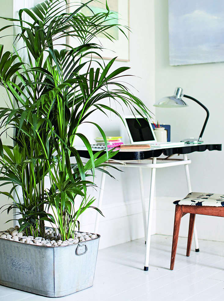 Tall House Plant For A Dark Corner Of A Room
