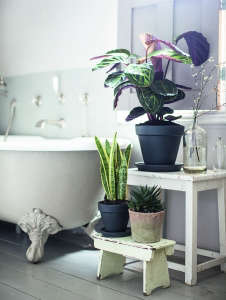Isabelle Palmer, The House Gardener, Tropical Plants in Bathroom | Gardenista