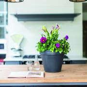 Isabelle-Palmer-The-House-Gardener-Gardenista-11