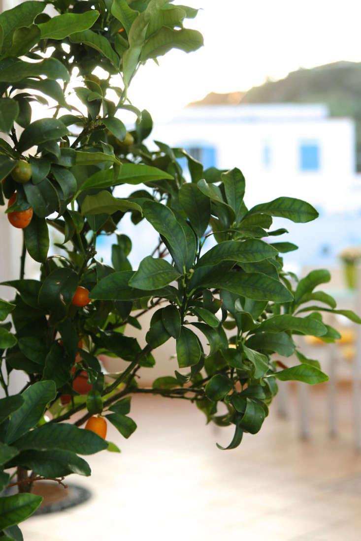 Italy-Island-Stay-Near-Capri-Summer-Courtyard-Mediterranean-Terrace-Gardenista-15
