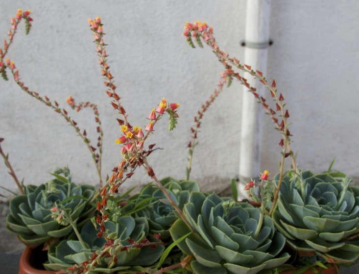 Italy-Island-Stay-Near-Capri-Summer-Courtyard-Mediterranean-Terrace-Gardenista-17