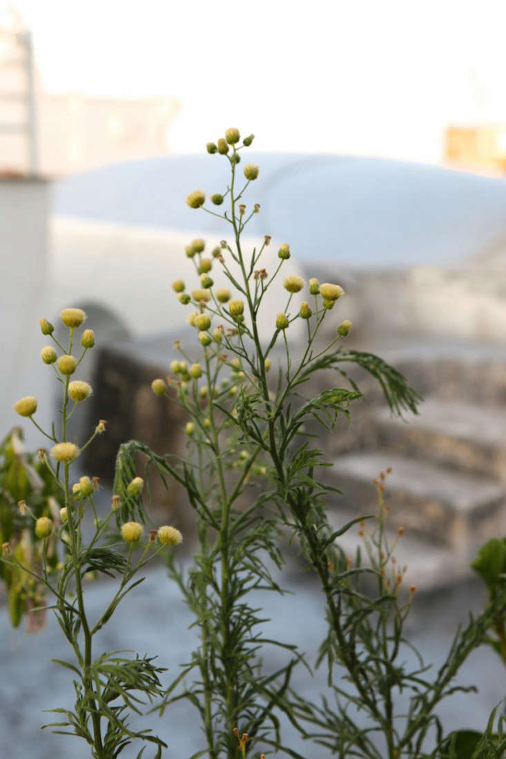Italy-Island-Stay-Near-Capri-Summer-Courtyard-Mediterranean-Terrace-Gardenista-18