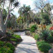 Janet-Hall-Huntington-Desert-Garden–path