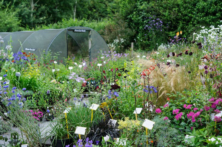 Jason-Ingram-photo-Special-Plants-Nursery-UK