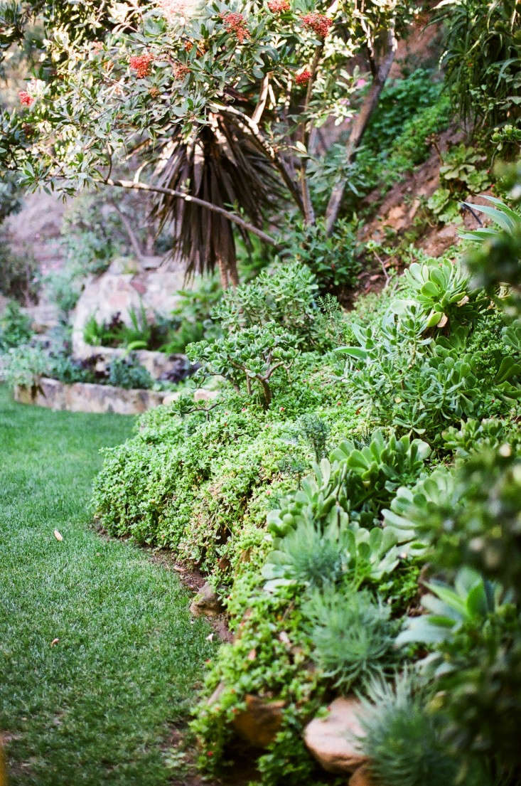 Kathleen-Whitaker-Echo-Park-Garden-Shrubs-Gardenista-01