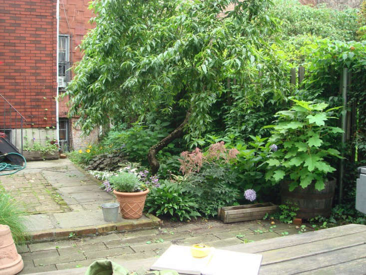 Kim Hoyt Architect Boerum Hill Brooklyn Project Before Image of Backyard, Gardenista