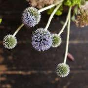 Kubik-140701-Petaler_057-Gardenista