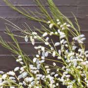 Kubik-140701-Petaler_083-Gardenista
