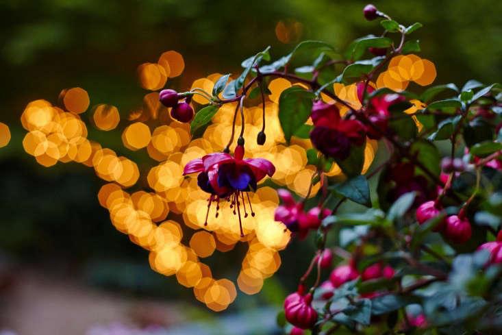 Kubik-marni-leis-Gardenista_16