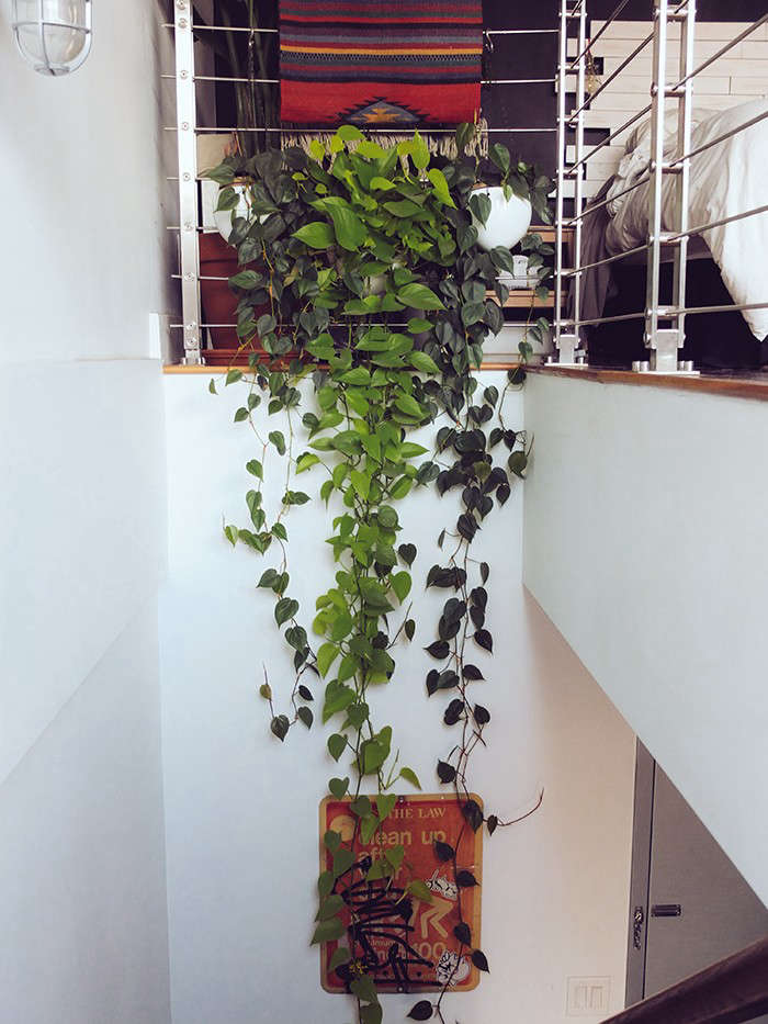 Liz Tan, Best Indoor Garden Gardenista Considered Design Awards12