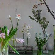 Longest-Lasting-Spring-Flowers-Day-2-Gardenista