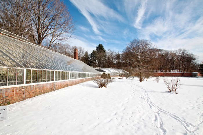 Lyman Estate Greenhouses, peach wall
