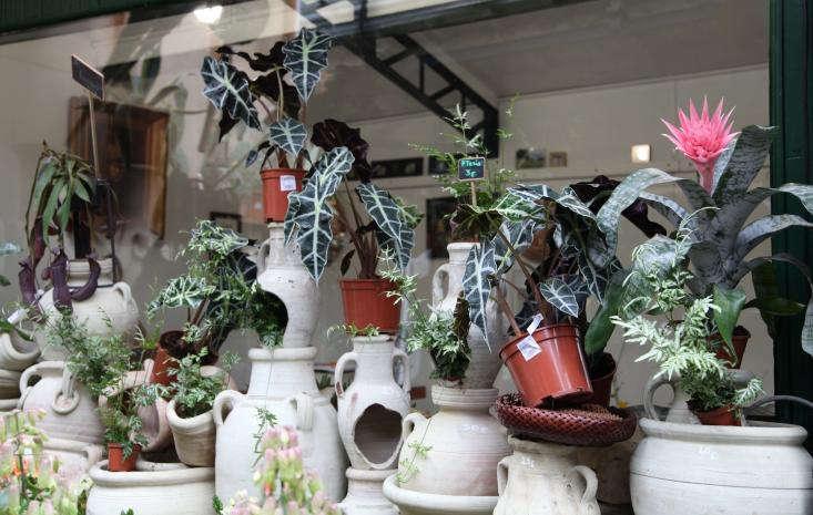 Marche-aux-Fleurs-Gardenista-03
