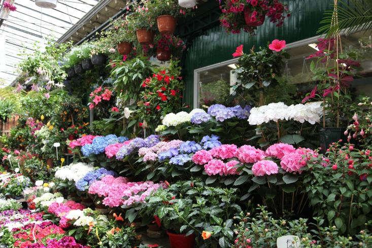 Marche-aux-Fleurs-Gardenista-06