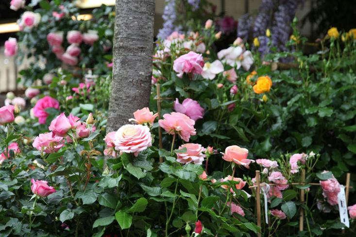 Marche-aux-Fleurs-Gardenista-12