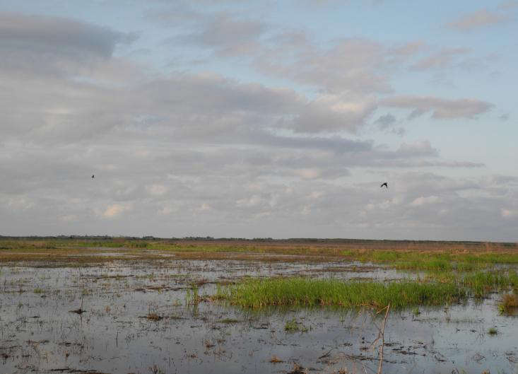 Marshes in Anahuac for gardenista