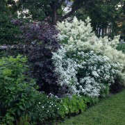 Molly-Boxer-Finalist-Gardenista-Considered-Design-Awards-5