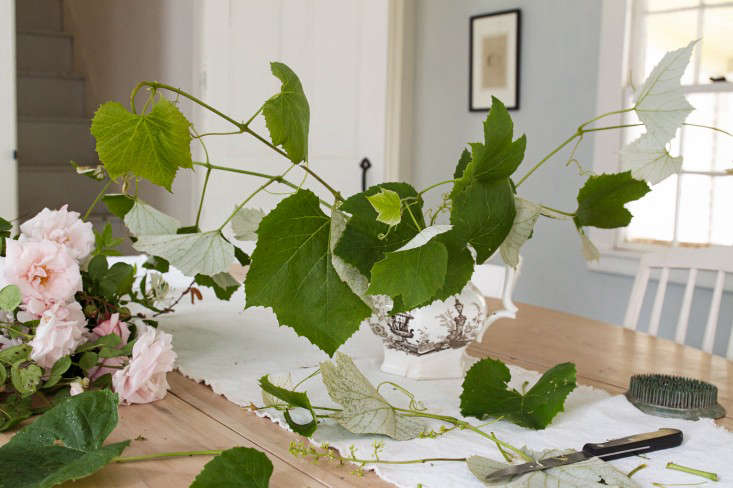 New Dawn Rose Bouquet, base of grape leaves, by Justine Hand for Gardenista