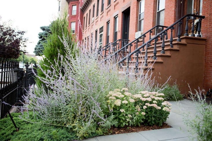 New-Eco-Landscapes-Bed-Stuy10-front-yard-Gardenista