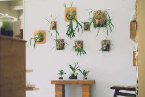 staghorn ferns | gardenista