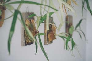 shopper's diary: paiko in honolulu | gardenista