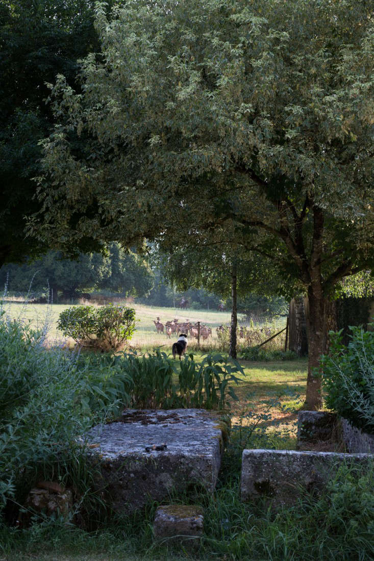 Pas-de-Blenacs-cheese-france-mimi-giboin-gardenista-46