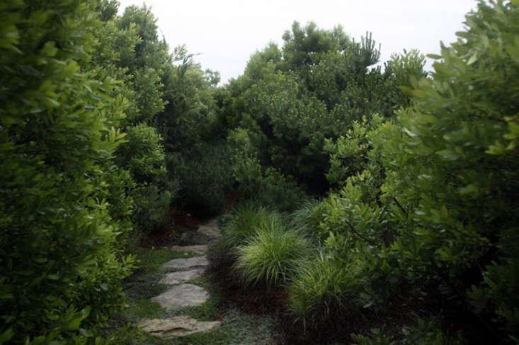 Paula-hayes-seaside-residence-garden-all-green-gardenista