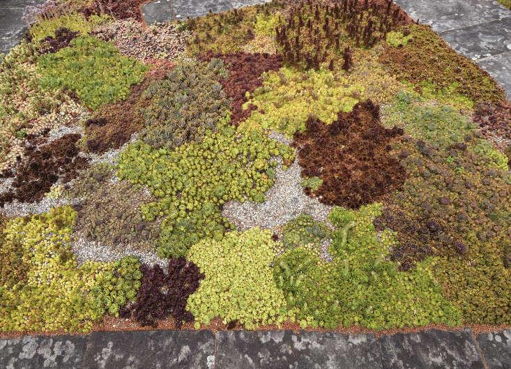 Philip-Johnson-glass-house-succulent-closeup-gardenista