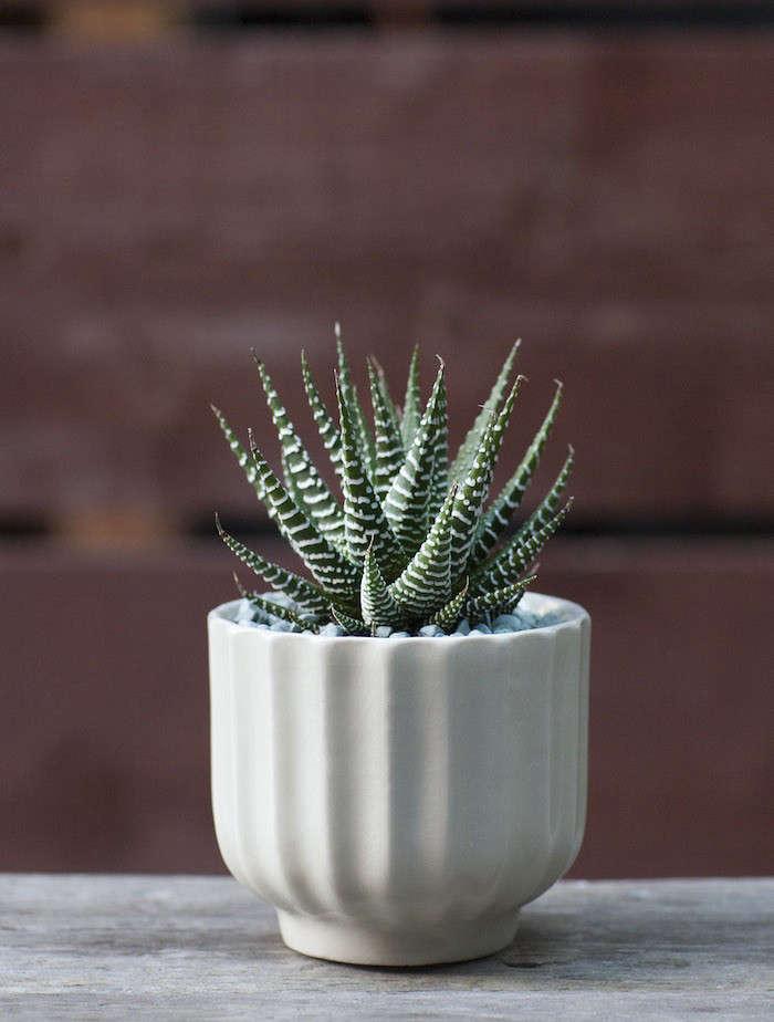 Plant-Recipe-Book-Baylor-Chapman-Zebra-Plant-Gardenista