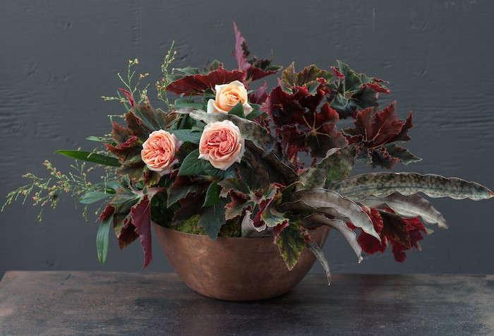 Plant-Recipe-Book-Sansevieria-Recipe-Gardenista